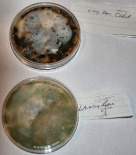 the mold resulting from the poor work showed itself five years after the and addition work dangerous was the black mold