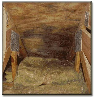 attic mold & Mold Removal Company Philadelphia Moisture Frost Attic Basement Mildew