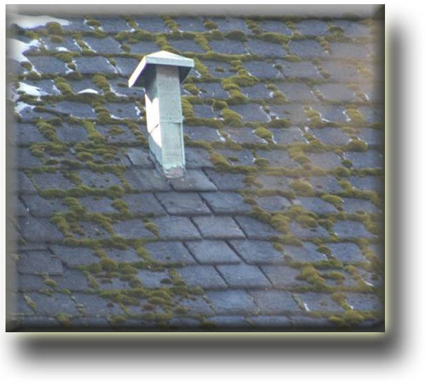 Roof Rooftop Mold Mildew Moss Create Health Hazard And Can Be Eradicated